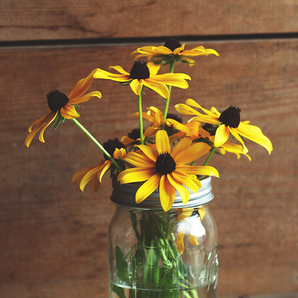 relaxing and soothing Maryland flowers